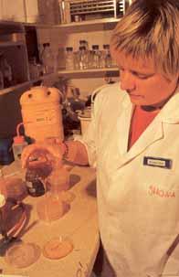 Шона Блайер за экспериментальной работой с медом