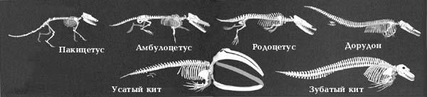 http://bio.1september.ru/2003/19/10.jpg