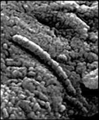 Рис.1. Так, возможно, выглядят марсианские нанобы