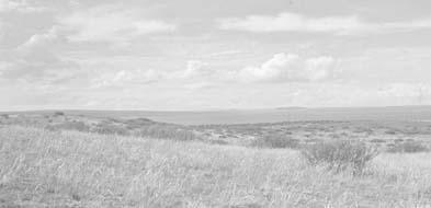 Насекомые степной экосистеме фото 646-257