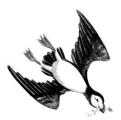 Особенности строения клюва птиц в