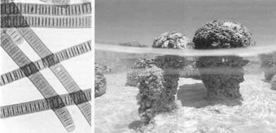 Современные цианобактерии и созданные ими строматолиты