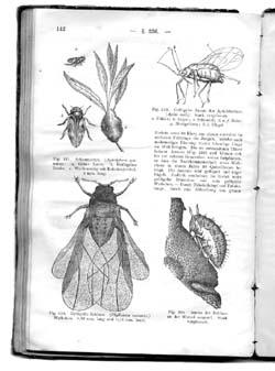 Биология 19 века доклад 6794