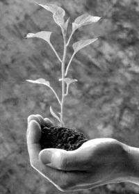 Европейские же ученые уже давно бьют тревогу из-за пыли с украинских полей. К такому выводу светила науки пришли после изучения необычайно большого пылевого облака, пришедшего в Европу с Украины в конце марта 2007 года.