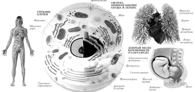 Но клетки не вечны, и мы тоже.  На самом деле, жизнь