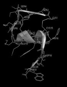 Рис.15. Пространственная структура сосудосокращающего пептида эндотелина-1 человека