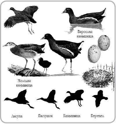 В Азовском море гибнут тысячи водоплавающих птиц Они запутываются в.