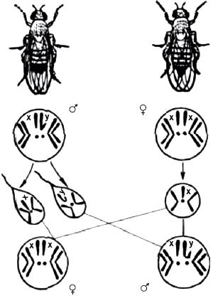 Схема определения пола у