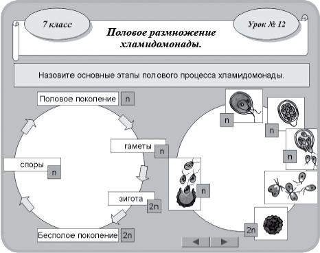 Жизненный цикл последовательно