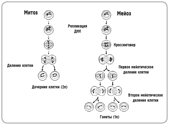определения, схемы,