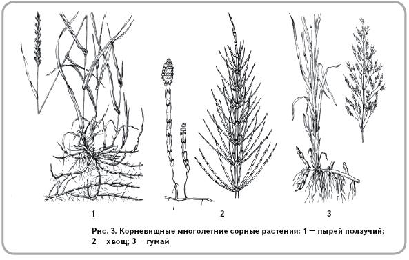 Жизненная форма растительного