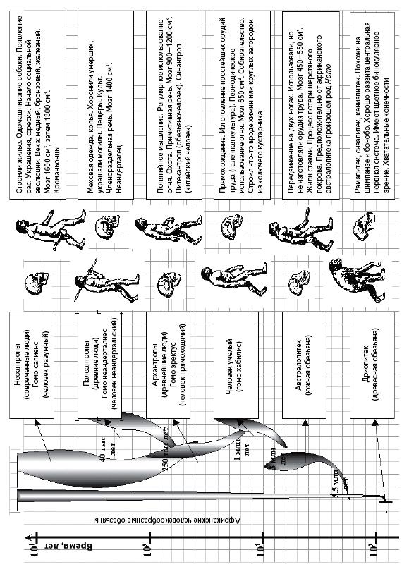 Схема «Эволюция человека»